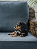 10 Reasons Why Getting a Puppy Is Self Care