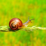 Snail Slime is A K-Beauty Secret That Targets Dry Skin and Acne Scars
